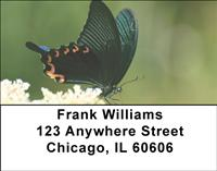 Black Swallowtails Address Labels