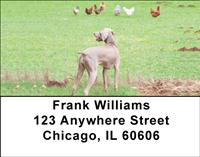 Hunting Dogs Address Labels
