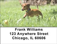 Playful Dachshunds Address Labels