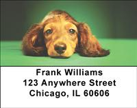 Adorable Dachshunds Address Labels