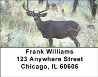 Wild Bucks Address Labels