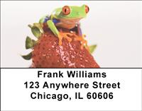 Frogs On Fruit Address Labels