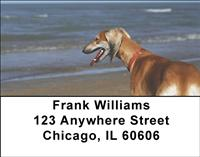 Greyhounds On The Beach Address Labels