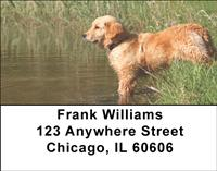 Golden Retrievers By The Water Address Labels