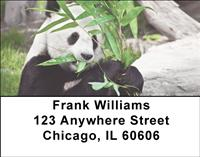 Panda Snack Time Address Labels