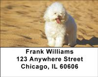 Poodles At The Beach Address Labels