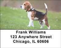 Beagle Puppy Address Labels
