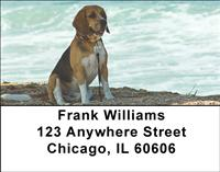 Beagles At The Beach Address Labels