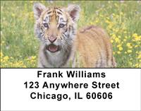 Tiger In The Grass Address Labels