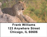 African Leopards Address Labels