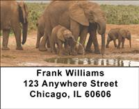 At The Water Hole Address Labels
