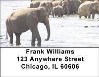 Elephants Cooling Off Address Labels