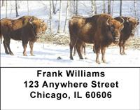 Bison In Winter Address Labels