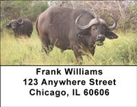 African Buffalo Address Labels