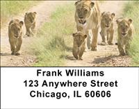 Lions In Training Address Labels