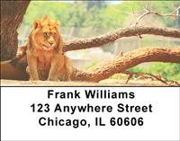 Resting Lions Address Labels