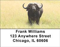 Grazing Buffalo Address Labels