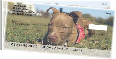 Pitbull Puppies Side Tear Checks Pitbull Puppies Side